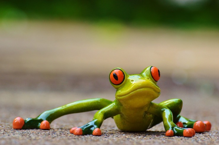 frog-927764_960_720